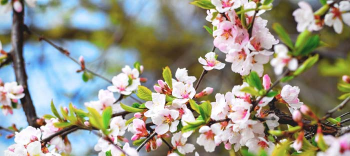 Spring is a wonderful time to enjoy shopping, dining, and the wonderful sights in Willow Grove, Montgomery County PA
